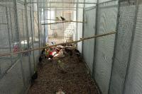 Молодняк птицы в питомнике